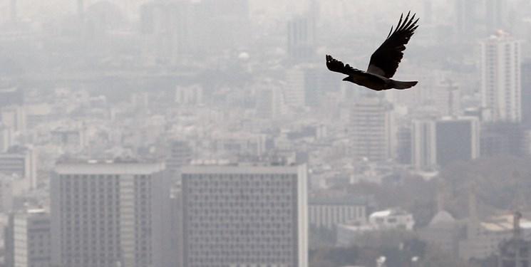 نگاه استارتاپ های فعال حوزه کاهش آلودگی هوا به جهاد ملی و اراده مسؤولان